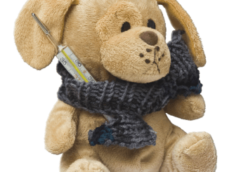 Fiebermessen beim Baby