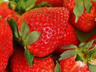 Erdbeeren in der Stillzeit