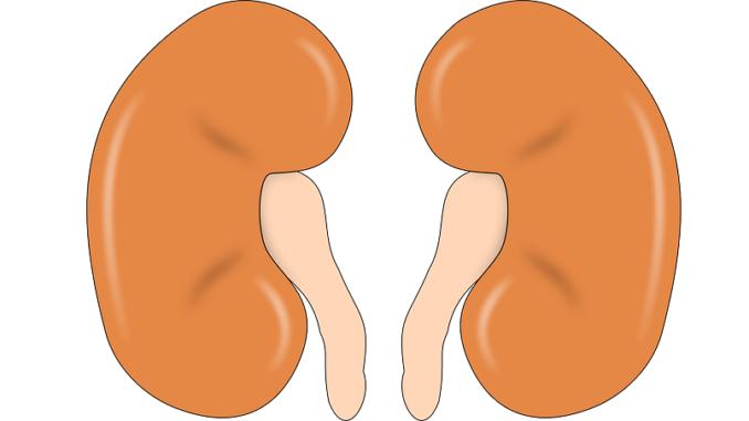 Nierenstau beim Baby