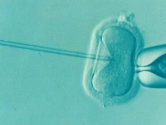 Was kostet eine kuenstliche Befruchtung?